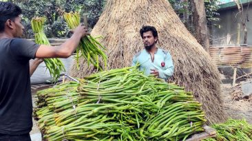 ইউরোপ ও মধ্যপ্রাচ্যের বিভিন্ন দেশে রপ্তানি হচ্ছে কুমিল্লার কচু-লতি